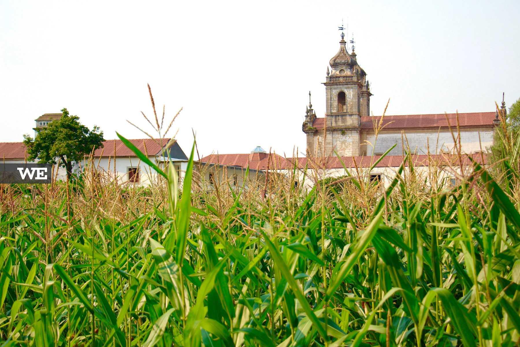 Vista do Mosteiro de Tibães a partir dos jardins