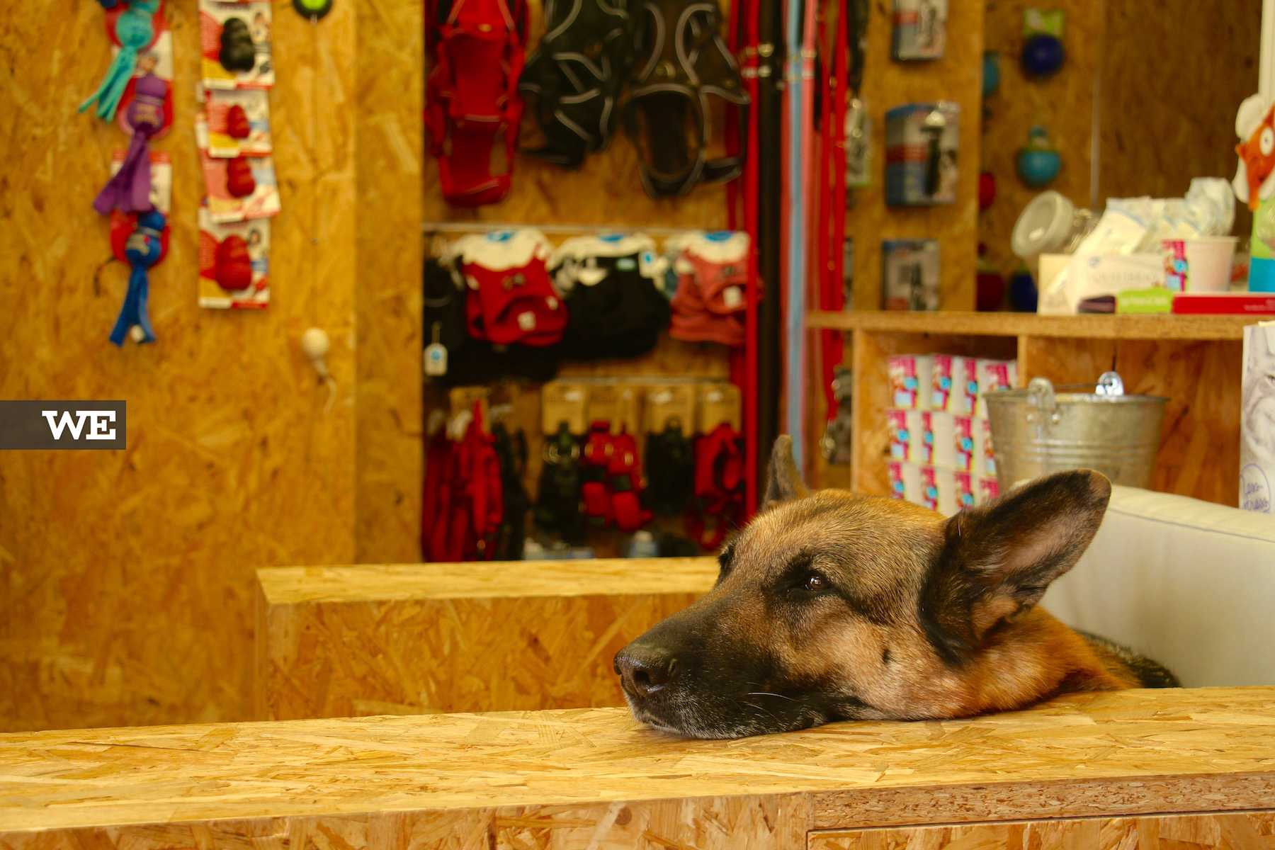 Na Petbliss o seu cão ou gato é convidado a explorar a loja a vontade