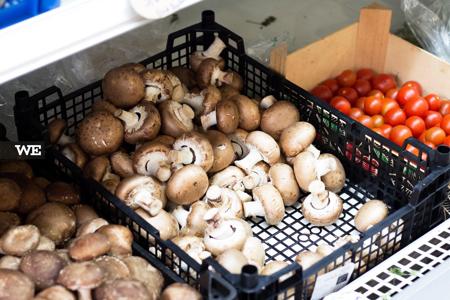 Cogumelos Biológicos